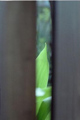 20060317z.jpg