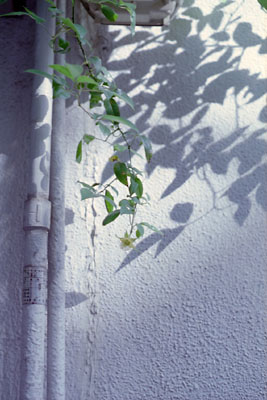 20060523z.jpg