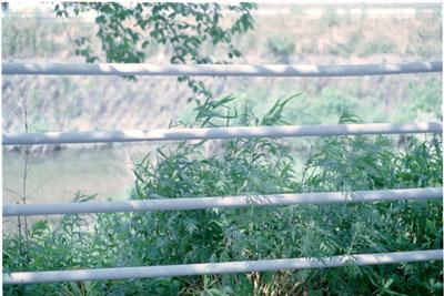 20060525z.jpg