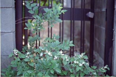 20060604y.jpg