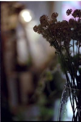 20060613z.jpg
