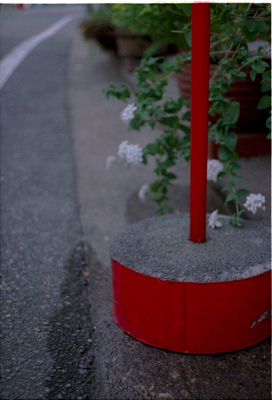 20061111z.jpg