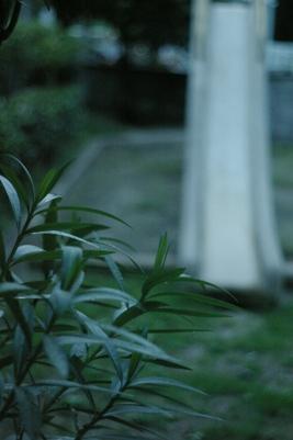 20070913z.jpg