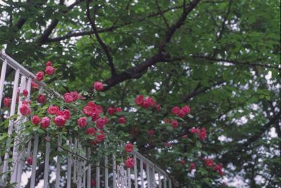 20080613z.jpg